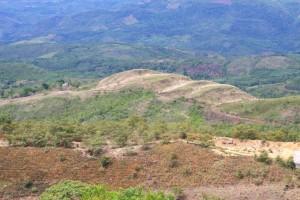 More Rainforest Devastation