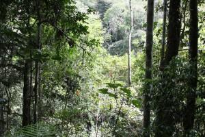 Incredible Botanical Diversity
